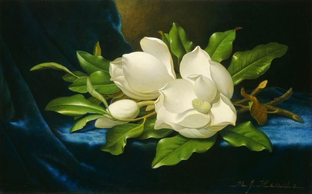 1280px-Martin_Johnson_Heade_Giant_Magnolias_on_a_Blue_Velvet_Cloth_NGA