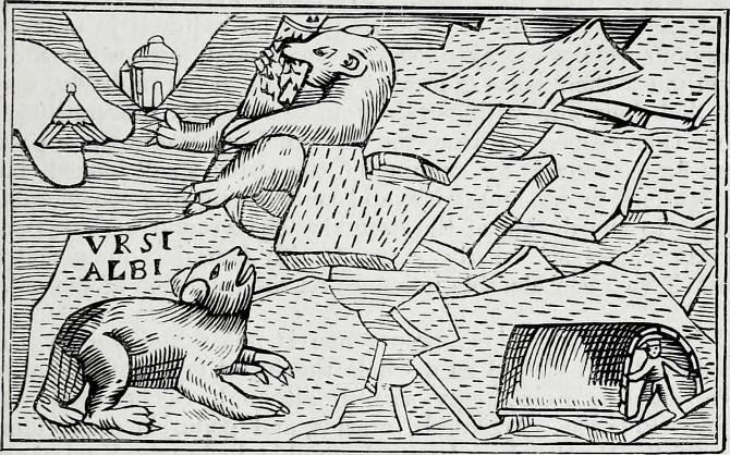 2-polar-bear-maps