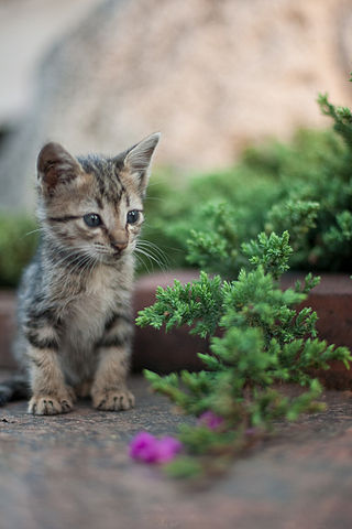 320px-Kitten_in_Rizal_Park,_Manila
