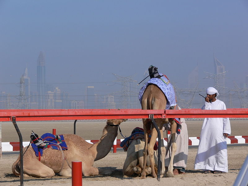800px_Camels_with_robot_jockies-1