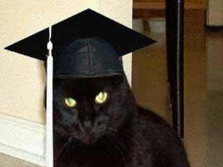 Colby_the_College_Cat