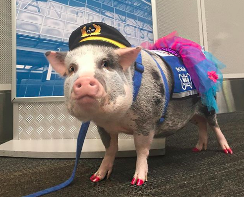 The Therapeutic Value of a Not-Quite-Flying Pig | Now I Know