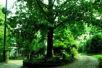 Treethatownsitself