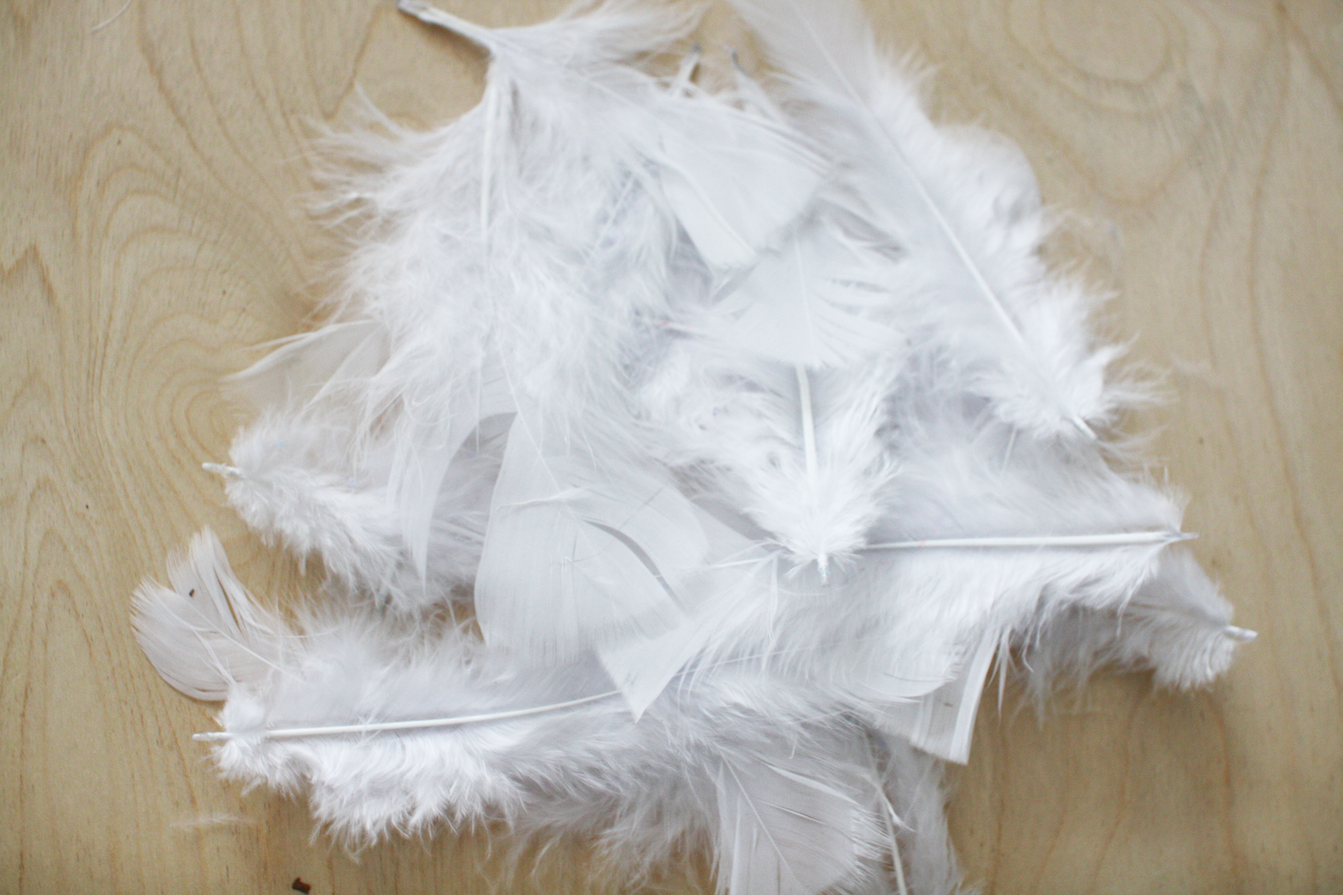 feathers-9