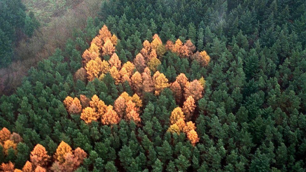nc_swastika_forest_ll_130705_16x9_992
