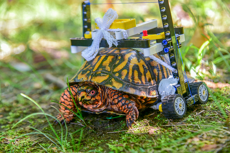 turtle-168c15ec-c158-11ea-9fdd-b7ac6b051dc8-768×513-1